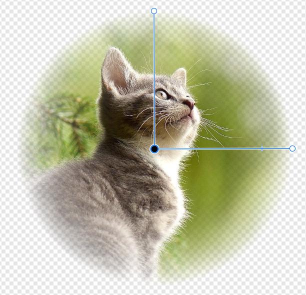 透明性ツールのタイプ「楕円」の操作方法